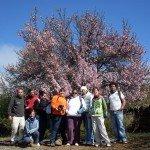 Almendros en Flor (Enero)